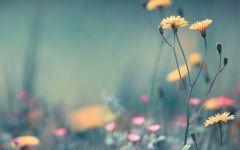 文艺花朵图片唯美