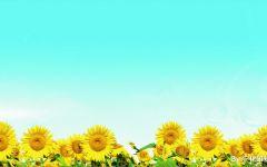 蓝天花朵图片唯美