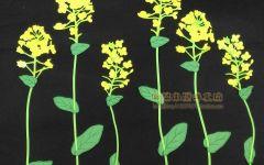 黑板报的花朵