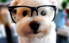 可爱小狗崽图片