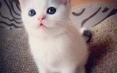 猫图片可爱萌萌