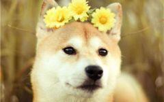 可爱狗子的图片