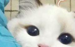 猫咪头像可爱情侣