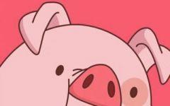 猪的头像情侣