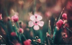 唯美小花图片