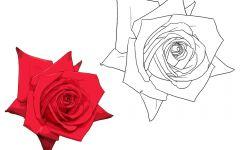 玫瑰花动漫简图
