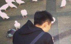 鸽子情侣头像高清