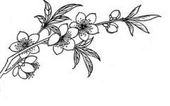 桃树叶简笔画