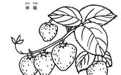 草莓藤简笔画