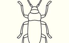 楸甲虫简笔画