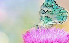 微信头像蝴蝶