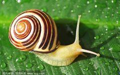 蜗牛唯美图片