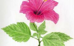 画花朵的图片