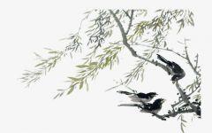 国画柳树黑白