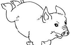 简笔画猪图片