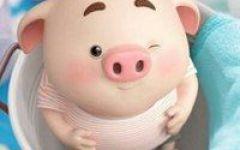 猪的微信头像火