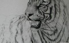 老虎的素描画