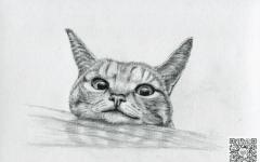 猪蹄的素描画