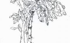 大榆树简笔画