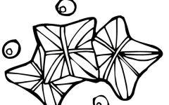 紫荆叶简笔画