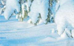下雪的唯美图片