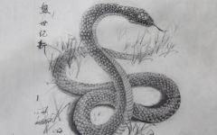 铅笔画蛇大全