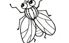 苍蝇的简笔画