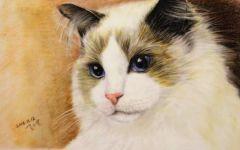 可爱小猫彩铅画