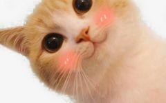 可爱猫咪卖萌图片