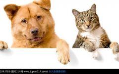猫狗合影图片可爱