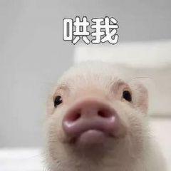 搞笑猪表情包