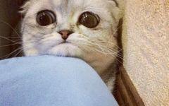 委屈的小猫