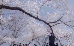 日系白色鲜花图