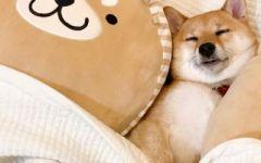 可爱图片小狗狗 小狗狗可爱图片