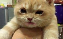 哭表情包 喵咪哭的表情包