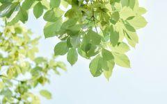 清新绿色的图片 绿色系头像